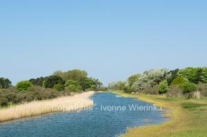 Dutch landscape at Waterleiding dunes