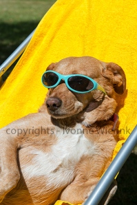 Dog taking sun bath