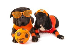 Dutch soccer supporters in orange