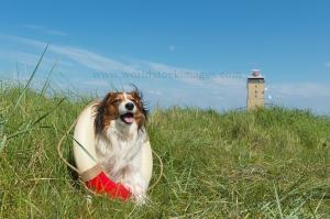 Rescue dog in nature