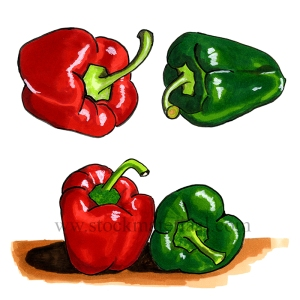 Illustration of paprika