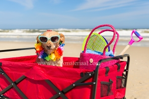 Funny dog with sunglasses on vacation at the beach